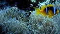 Abu Fendera, St. Johns, Elphinstone Reef - Diving the Red Sea 2011 Foto: Maciej Tomaszek :: Abu Fendera 58