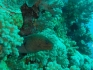 Safari nurkowe Brothers Islands 03.2008, fot. Maciej Tomaszek :: Brothers 41