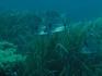 Wyprawa żeglarsko nurkowa Nototenia 2011, Wyspa Elba :: Elba 2011 27