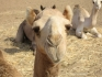 Safari nurkowe Marsa Alam - St. John's 2005, fot. Maciej Tomaszek :: Galeria 11 44