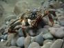 Wyprawa nurkowa Gwatemala, Belize, Honduras, Nikaragua  2007, fot.  Maciej Tomaszek :: Galeria 12 61