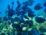 Nurkowanie Kajmany - Karaiby 2007 fot. Maciej Tomaszek :: Galeria 19 10