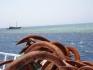 Safari nurkowe St. John's 04.2005  fot. Maciej Tomaszek :: Galeria 24 26