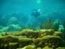 Nurkowanie San Blas Indianie Kuna Panama 2007  fot. Maciej Tomaszek :: Galeria 28 27