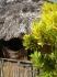 Nurkowanie San Blas Indianie Kuna Panama 2007  fot. Maciej Tomaszek :: Galeria 28 97