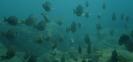 Kolumbia 2004 nurkowania w parku Tayrona - Karaiby fot. Maciej Tomaszek :: Galeria 36 24