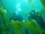 Nurkowanie USA Wyspa Avalon 2006, fot. Maciej Tomaszek :: Galeria 4 15