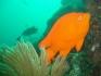 Nurkowanie USA Wyspa Avalon 2006, fot. Maciej Tomaszek :: Galeria 4 19