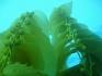 Nurkowanie USA Wyspa Avalon 2006, fot. Maciej Tomaszek :: Galeria 4 35