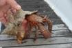 Karaiby 2012 Wyspy Dziewicze Virgin Islands Nototenia :: Karaiby 2012 Wyspy Dziewicze Virgin Islands Nototenia 43