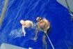 Karaiby 2012 Wyspy Dziewicze Virgin Islands Nototenia 48