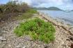 Karaiby 2012 Wyspy Dziewicze Virgin Islands Nototenia :: Karaiby 2012 Wyspy Dziewicze Virgin Islands Nototenia 49