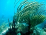 Karaiby 2012 Wyspy Dziewicze Virgin Islands Nototenia 7